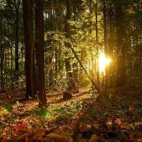 Костёр в лесу :: Alexander Andronik