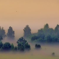 в тумане :: дмитрий посохин
