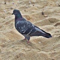 Пляжный сезон, закончен? :: Swetlana V