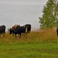 последняя свежая трава :: petyxov петухов