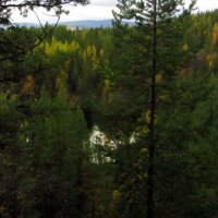 Этот дремучий,дремучий лес.. :: Галина Полина