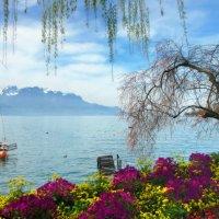 Весна открывает занавес :: Elena Wymann