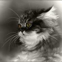 Шиншилла-3-из серии Кошки очарование мое! :: Shmual Hava Retro
