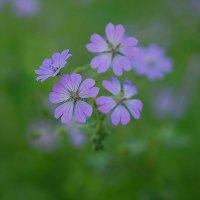 Майские цветы :: Swetlana V