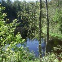 У лесной реки :: Марина Домосилецкая