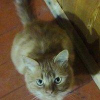 Негодование кошки :: татьяна