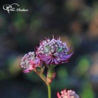 Цветы лета :: Андрей Тер-Саркисов