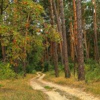 Лесная дорога в осень... :: Alex Alex