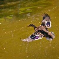 Летать так летать... я им помашу рукой... :: Наталья Костенко