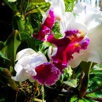цветы :: Таня