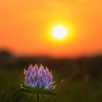 На закате..... лета..... :: Julia Martinkova