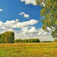 Пришла осень :: Владимир Зыбин