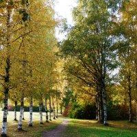 Дыхание Осени... :: Марина Харченкова