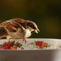 аристократы :: linnud