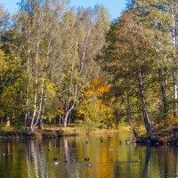 Осень в старом парке 2 :: Виталий