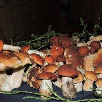 И опять про грибы..... :: Hаталья Беклова