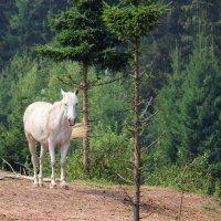 портрет на фоне леса :: Анна -