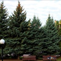 Сон в парке на лавочке :: Татьяна Пальчикова