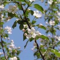 Весна :: Михаил Андреев