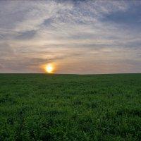 В восход на клеверных полях (Суздальский район, август) :: Igor Andreev