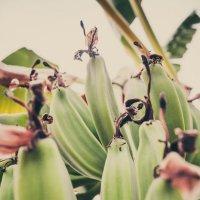 Банананананки :: Yana Fizazi