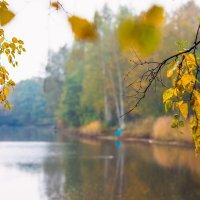 Осень в старом парке 5 :: Виталий