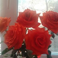 Розы на окне :: марина ковшова