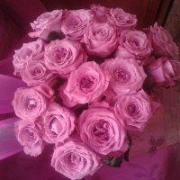 Розовые розы :: марина ковшова