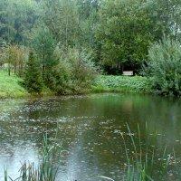Заброшенный пруд. Дождь :: elena manas
