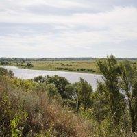 Река Ока :: Татьяна Суетина
