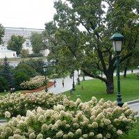 Александровский сад :: натальябонд бондаренко