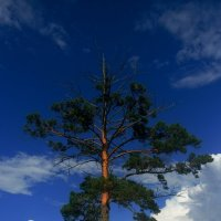 Дерево в деревне :: Елена Бушуева