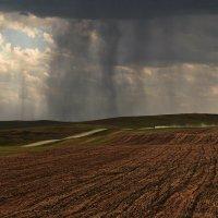 В полях, под зноем и дождём 2 :: Сергей Жуков