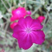 Флора Армении :: Volodya Grigoryan