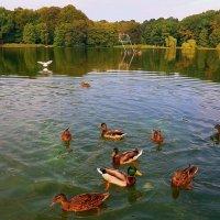 Утки на озере :: Nina Yudicheva