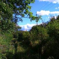 На лесной просеке. :: Татьяна ❧