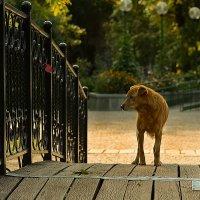 собака :: Валерий Чернов
