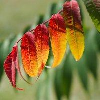 Краски осеннего сада :: Swetlana V