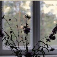 Осенний букет :: galina bronnikova