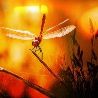 ..хвост по ветру..., готова к опасностям, приключениям и безрассудству.. :: Лилия .