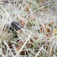 Белый иней, чёрный гриб :: Денис Samuila