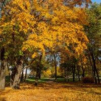Осень в пригороде 5 :: Виталий
