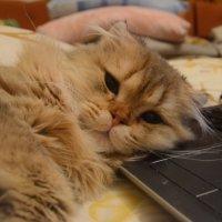 мой котя шрек :: Аннушка Гущина