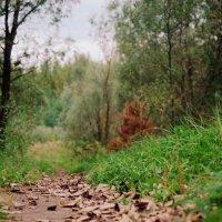 Дыхание Осени :: Saniya Utesheva