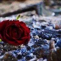 красное на пепле :: алексей сергиенко