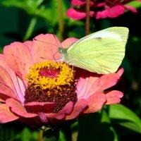 Бабочка ... :: Марина Романова