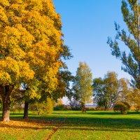 Осень на берегу Разлива :: Виталий