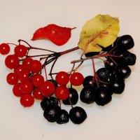 Красное и чёрное :: Виктор Никитенко