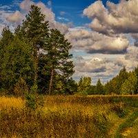 Дорога из леса :: Андрей Дворников