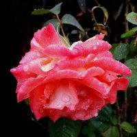 Под дождиком осенним ... :: Татьяна